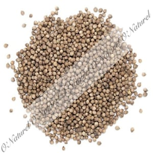 Coriander Seeds with Superb Smell