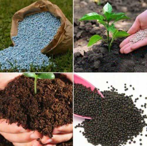 Plant Fertilizer Granules for Agriculture