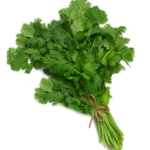 Iron 5% Highly Nutritious Healthy and Natural Fresh Green Coriander Leaves