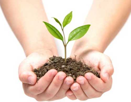 Agriculture Bio Fertilizer Powder