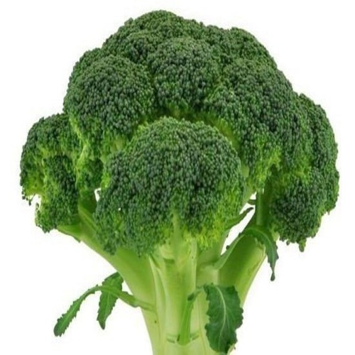 Fresh Green Broccoli Sprout