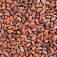 Raw Cocoa Beans for Food