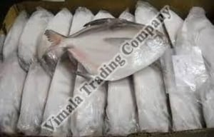 Frozen Silver Pomfret Fish for Cooking