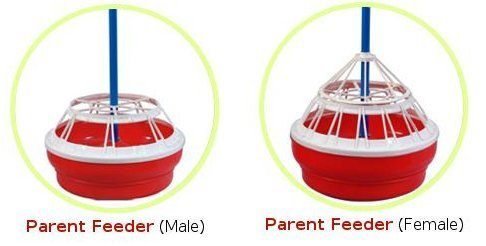 Parent Feeders (Male/Female)