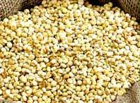 Yellow High In Protein Jowar