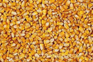 Organic Natural Dried Corn Kernels