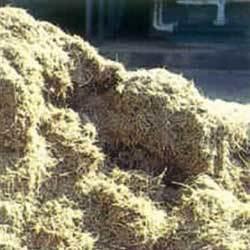 Agro Waste