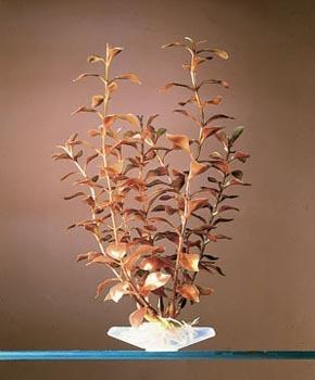 Penn Plax Small Plant