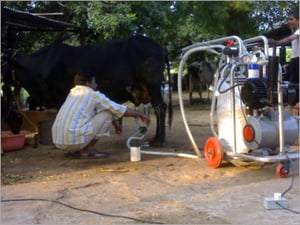 Fully Automatic Milking Machinery