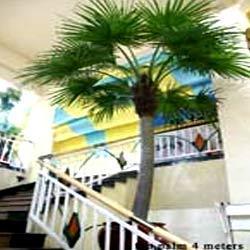 Fan Palm Trees in Chennai, Tamil Nadu - KUSAL FLORA