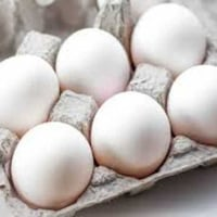 Best Quality Poultry Eggs