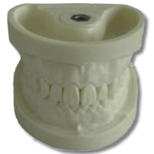 Dental Model Drilling Practice (Ez Type) (PST-02)