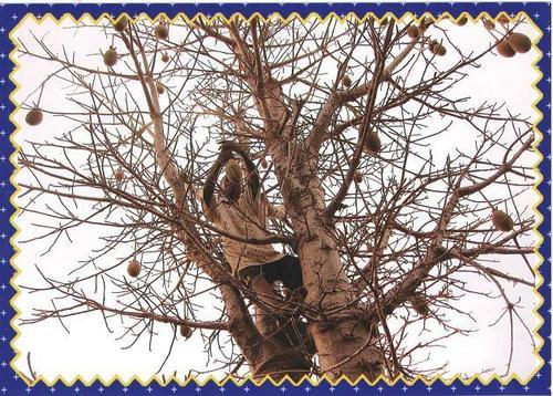 Baobab Super Dried Fruits Powder