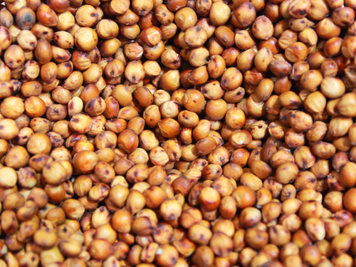 Glutinous Red Sorghum For Human And Animal Consumption