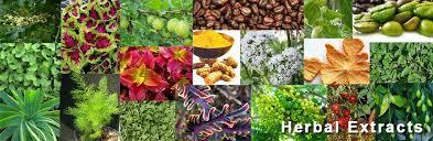 Ayurvedic Herbal Extracts in  Shastri Nagar