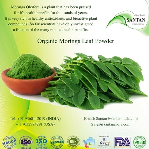 Organic Moringa Leaf Drumstick Oleifera Powder