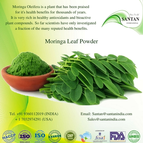 Moringa Oleifera Leaf Powder For Dietary supplements Energy drink and food industry
