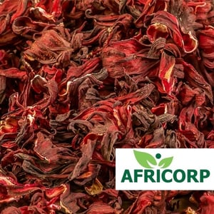 High Quality Red Hibiscus Flower
