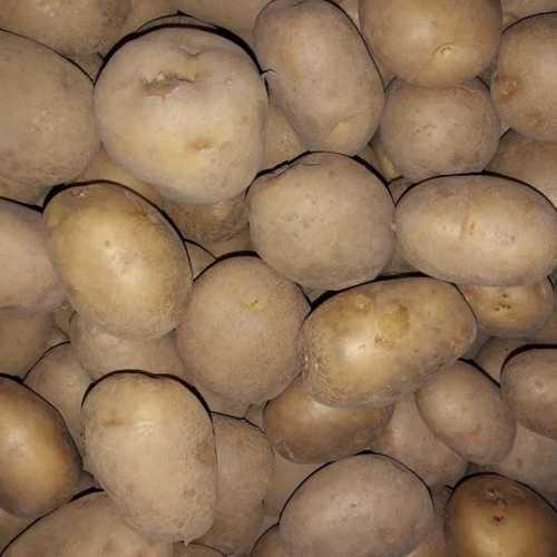 Fresh Potato In Kolkata, Fresh Potato Dealers & Traders In