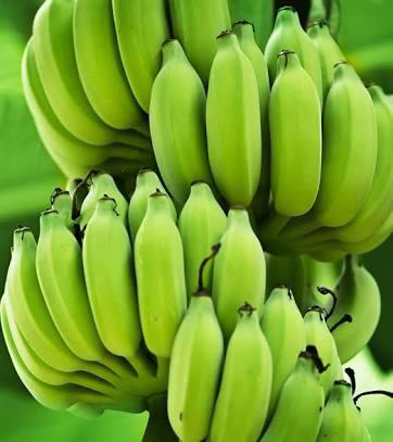 Fresh And Nutritious Banana
