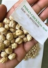 Machine Clean Indian Chick Peas