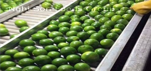 Fresh IQF Seedless Lime
