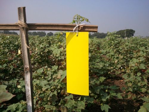 Durable Agricultural Sticky Trap