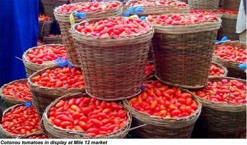 100% Natural Fresh Tomatoes