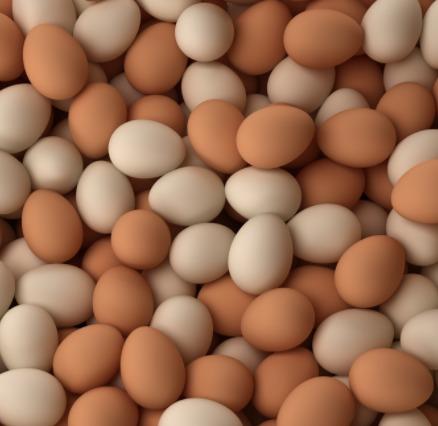 Fertilized Eggs Suppliers, Fertilized Eggs Exporters, Manufacturers