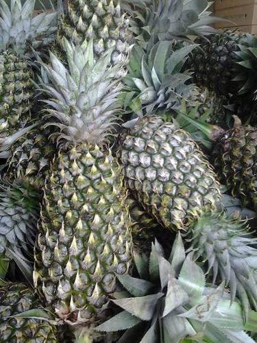 Vietnam Fresh Pineapples