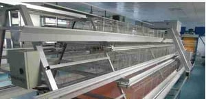 Stackable Chicken, Broiler Cages