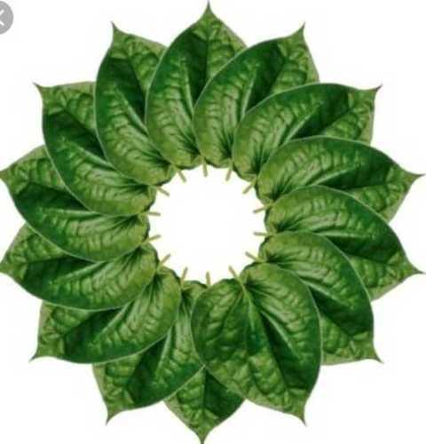 Betel Leaf (Paan Ka Patta)