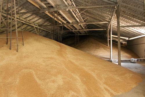 Impurity Free Barley