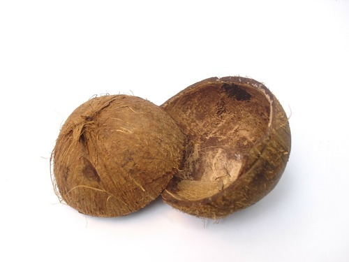Coconut Shell Cup - Manufacturers & Suppliers, Dealers