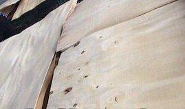 Acacia Rotary Cut Core Veneer