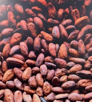 Natural Coco Seeds