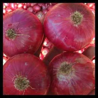 Pure Natural Red Onion