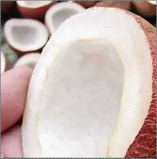 High Grade Coconut Copra