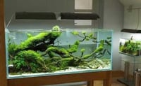Transparent Glass Fish Aquarium