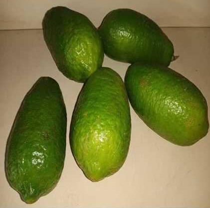 Fresh Assam Lemon (Kaji)