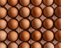Fresh Healthy Poultry Egg