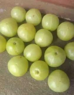 Organic Fresh Amla Fruit