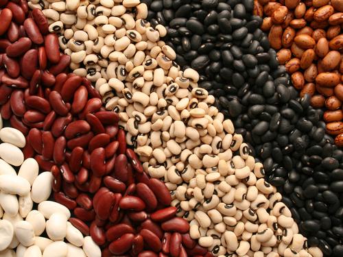 High Quality Hot Sale Black Kidney Beans