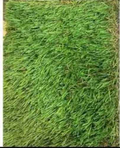 Plain Green Color Artificial Grass
