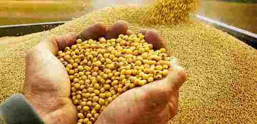 Organic Dried Bulk Soybean Seeds