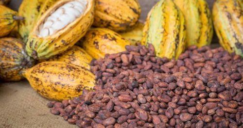 Rich Taste Dry Coffee Beans