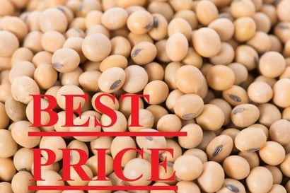 Yellow Soybean Seeds With 97% Purity