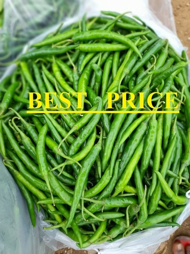 Export Quality Indian Green Chilli