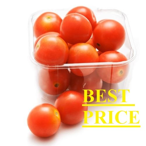 Export Quality Round Tomatoes