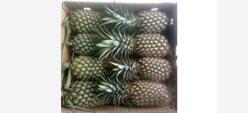 18-20cm Fresh Pineapple 1.5kg